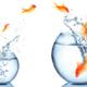 Wachstumskonzept für Führungskräfte dargestellt an Goldfischen, die von einem kleinen in ein größeres Glas springen.