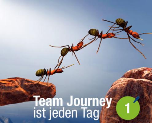 Blogbeitrag von Business Coach Eva Hönnecke: Team Journey ist jeden Tag, Teil 1 (Ameisen als Team)