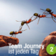 Blogbeitrag von Business Coach Eva Hönnecke: Team Journey ist jeden Tag, Teil 2 (Ameisen als Team)