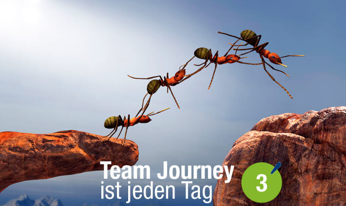 Blogbeitrag von Business Coach Eva Hönnecke: Team Journey ist jeden Tag, Teil 3 (Ameisen als Team)