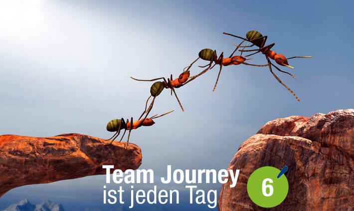 Blogbeitrag von Business Coach Eva Hönnecke: Team Journey ist jeden Tag, Teil 6 (Ameisen als Team)